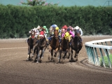 Fight to the Finish, Gulfstream Park, Florida