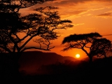 Serengeti National Park Sunset, Tanzania